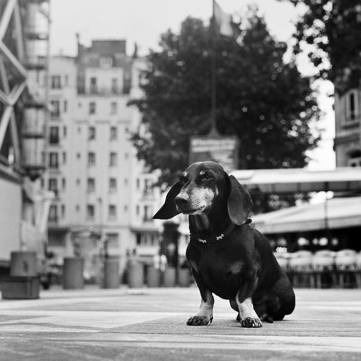 Le chien du maître de la craie