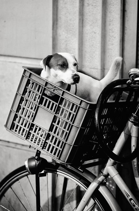 Le chien dans le panier