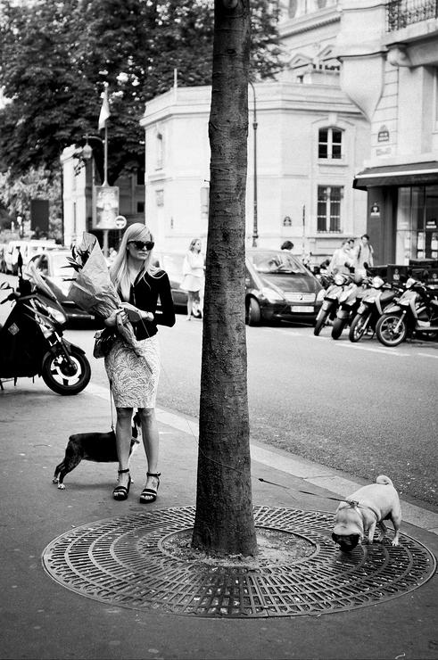 La belle et les deux chiens