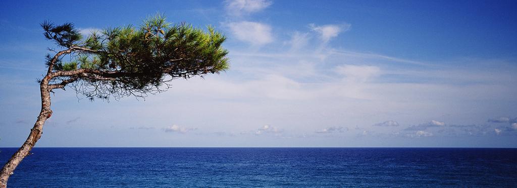 L'arbre qui contemple la mer