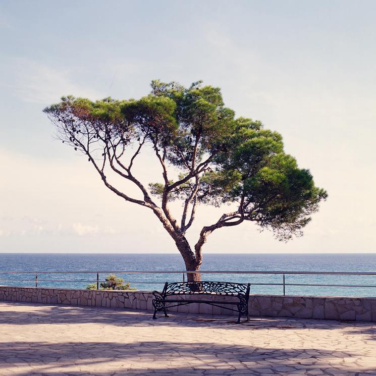 L'arbre qui veillait sur le banc en bord de mer