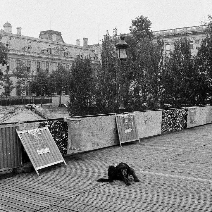 Walter sur le pont des arts pendant les travaux