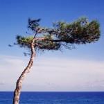 L'arbre posé sur le ciel bleu
