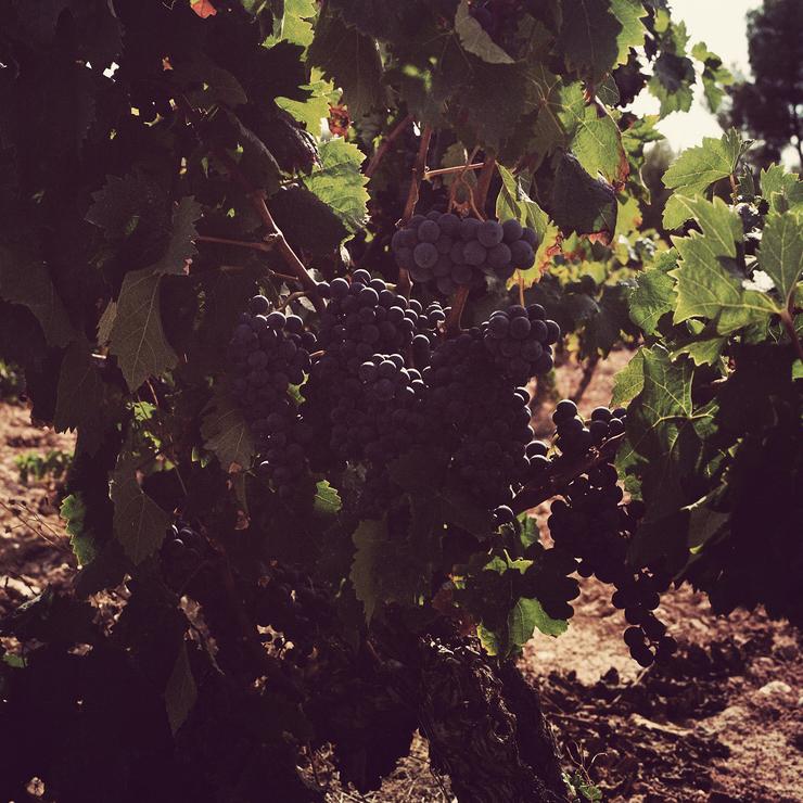 Le vin c'est la terre