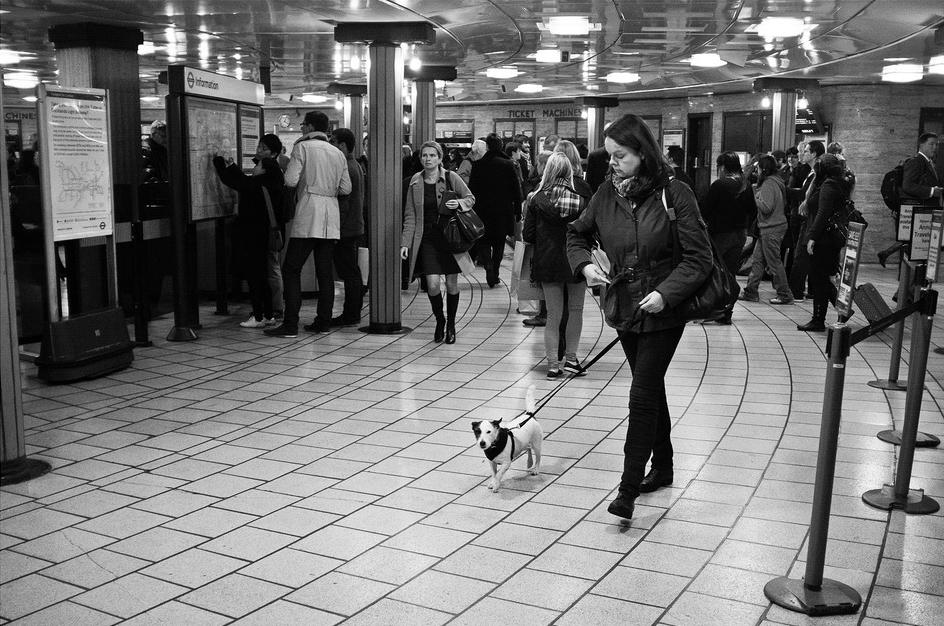 Le petit chien dans le métro