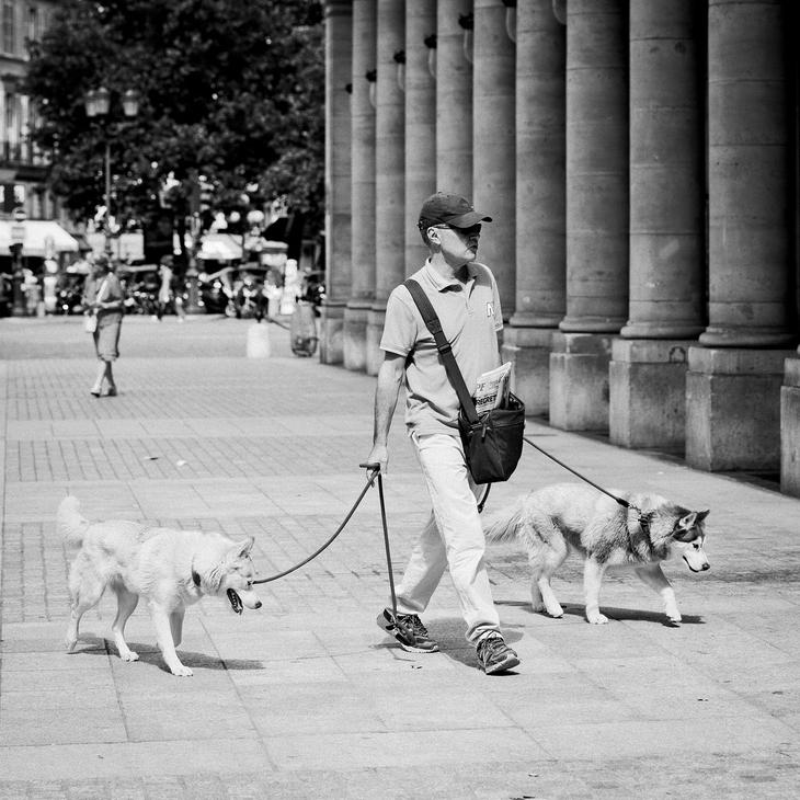 Monsieur Vincent et ses deux chiens