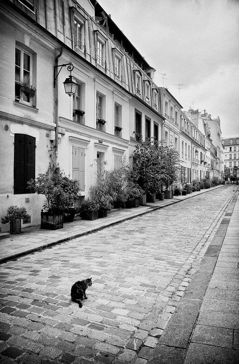 Le chat de la rue Crémieux