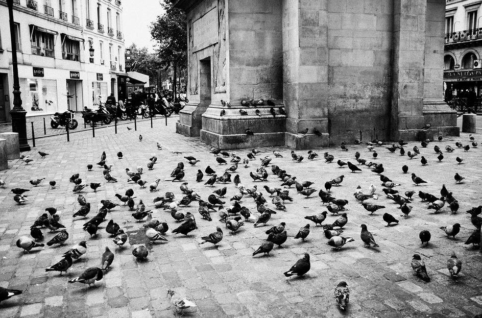 Place aux pigeons