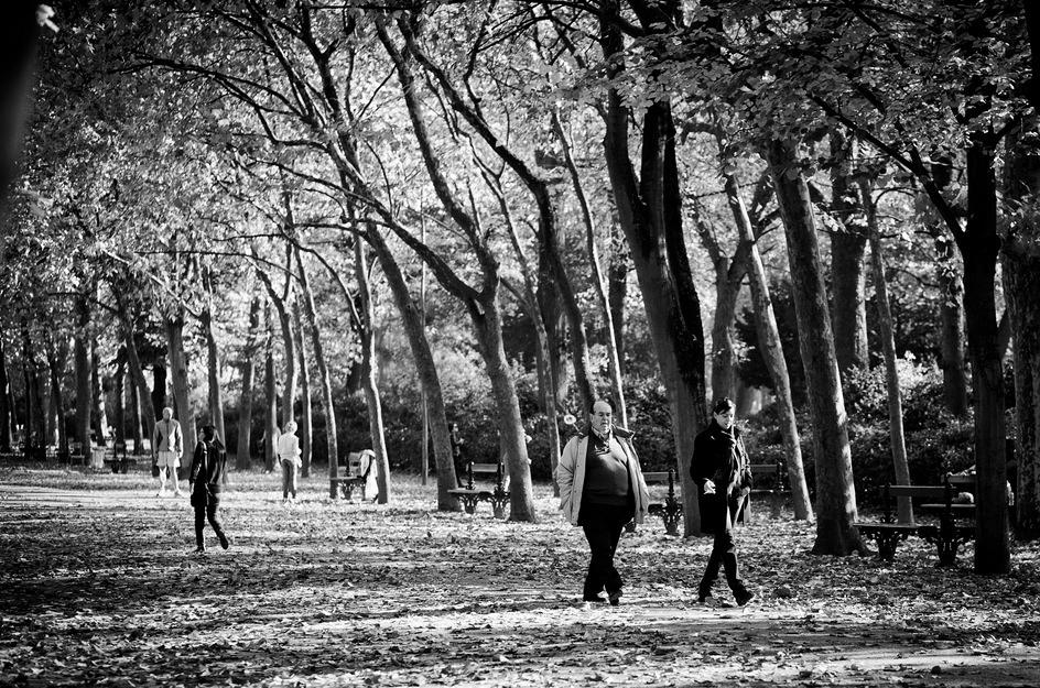 Flâner sous les arbres