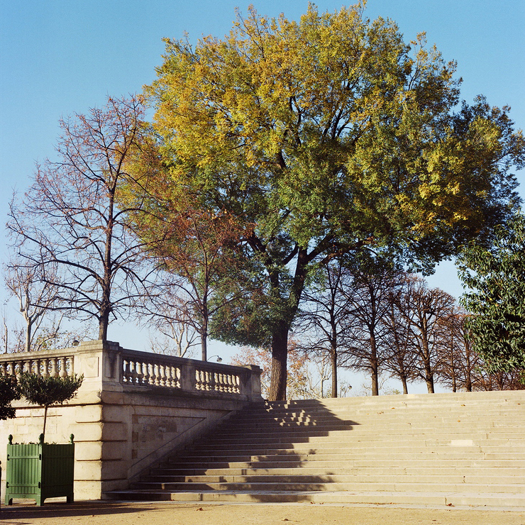 Un bel arbre