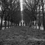 Les feuilles mortes du jardin du Palais Royal