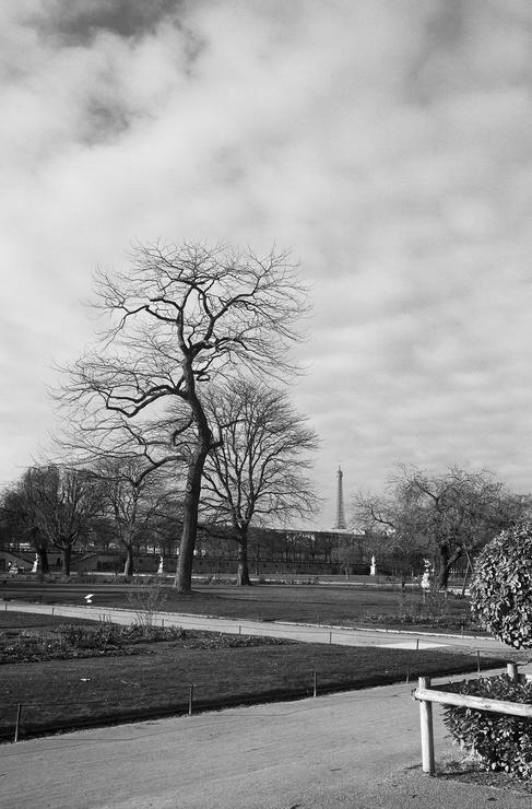 Un arbre qui n'est pas encore centenaire