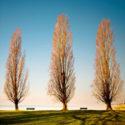 Trois arbres