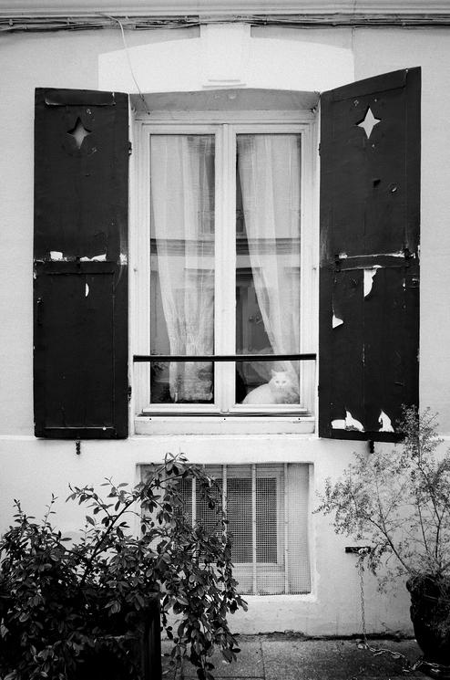 La chat derrière la vitre