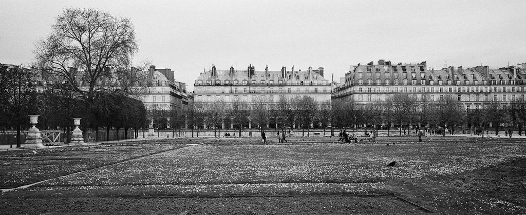 Au nord du jardin des Tuileries