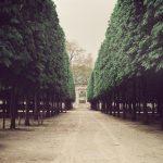 Allée dans le jardin des Tuileries