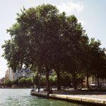 L'arbre au bord du canal de l'Ourcq