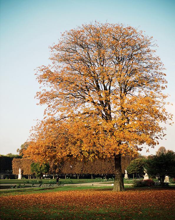 Cela ressemble à l'automne