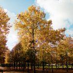 L'automne s'installe