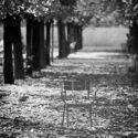 Le chemin des feuilles mortes