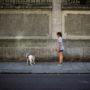 La petite puce et son chien.