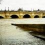 Des canards près du Pont-Neuf