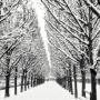 Des arbres et de la neige
