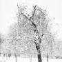 En hiver aux Tuileries