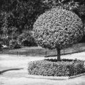 Le photographe et l'arbre boule