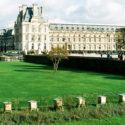 Automne / Jardin des Tuileries