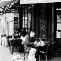 Un homme, deux chien et un café